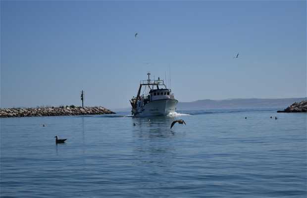 Estepona Nautica y Pesquera