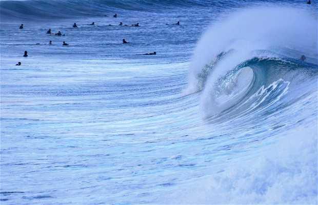 Praia de Manly