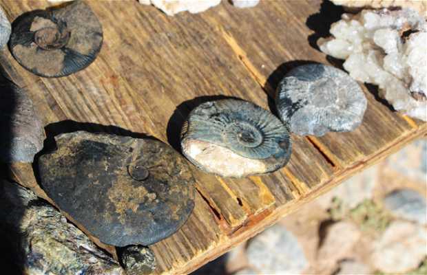 Fósiles del desierto Potosino