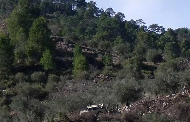 Sendero cerro del Batán-Bogarra