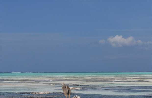 Spiaggia di Kiwengwa