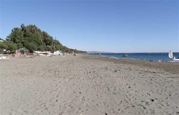 Playa Goddy´s