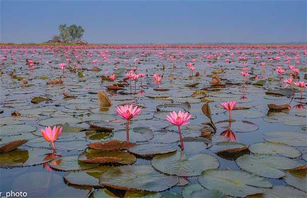 Red Lotus Lake - El Mar de los Lotos Rojos