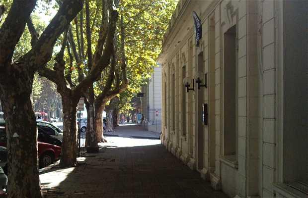 Avenida Gral Flores