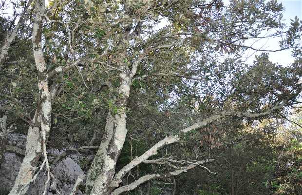 La flore dans la Réserve Naturelle des gorges de l'Ardèche