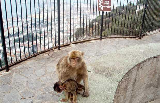 Mirador des singes