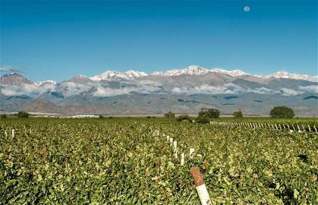 Rota do Vinho do Valle Central