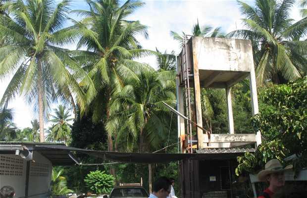 Mercado del coco