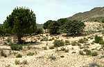 Oficina de turismo de caudete en caudete 1 opiniones y 1 for Oficina de turismo albacete