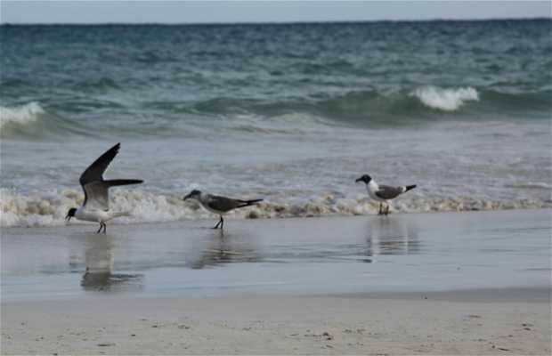 Playa Punta Bete
