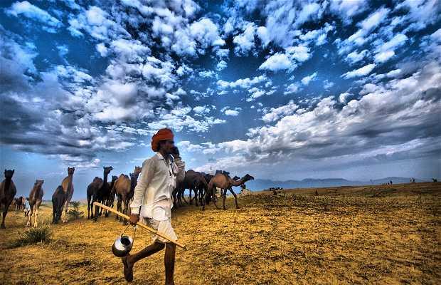 Feira de camelos de Pushkar