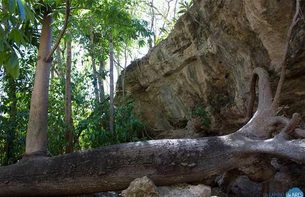 Cenote X-Batún
