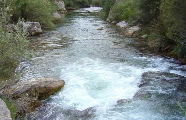 El Rio Cardener