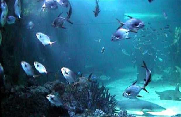 Sea Life Aquário