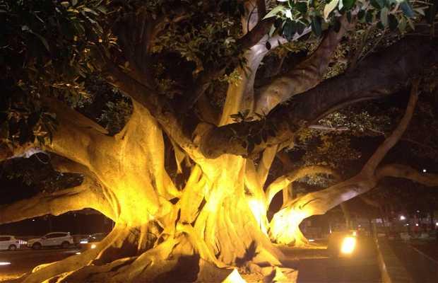 Árbol Mágico de Cádiz
