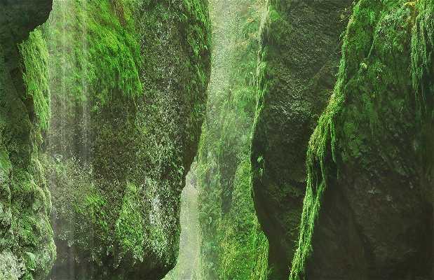 Canyon del Fiume Columbia a Stevenson