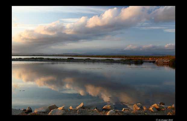 Salinas de Santa Pola Natural Park