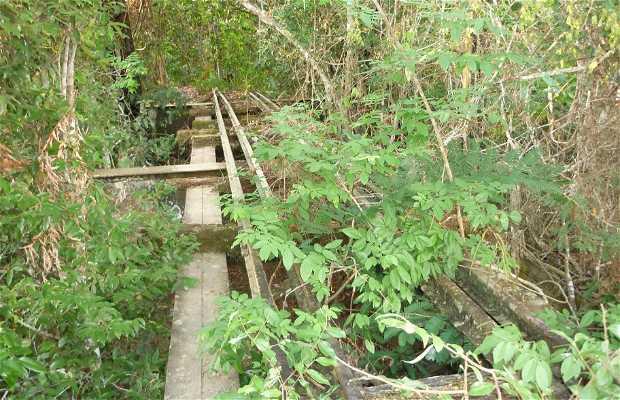 Naturaleza alrededor de Nova Mamoré