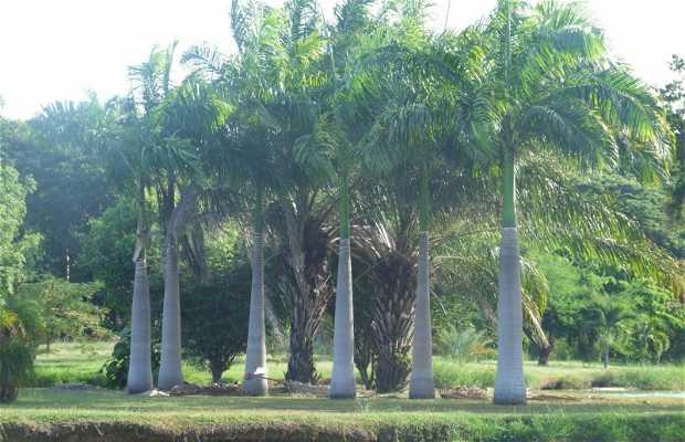 Jardim Botânico de Orinoco
