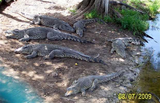 Allevamento di coccodrilli di Guamá