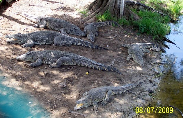Guamá Crocodile Farm