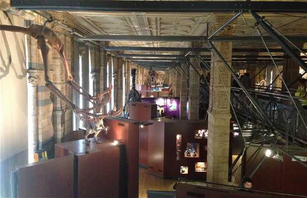 Le musée archéologique d'enseignement