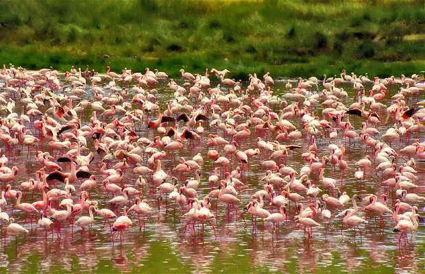 Parque Nacional do Lago Manyara