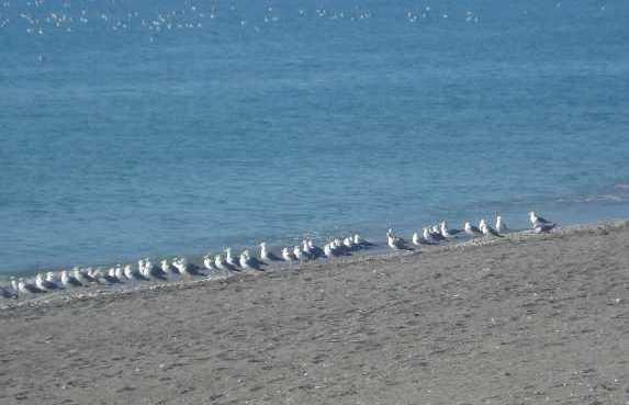 Spiaggia Calaceite