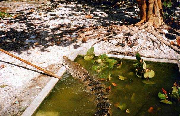 Criadero de caimanes y tortugas