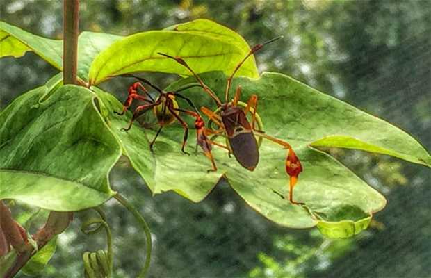 Insectario de Chipinque
