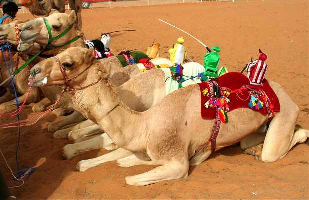 Camel Race Track de Sharjah