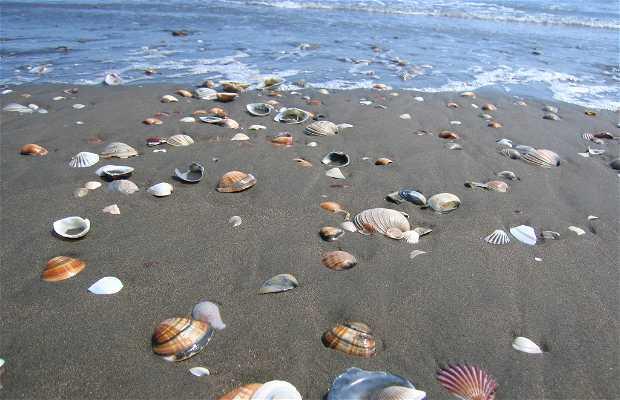 Playa Las Glorias