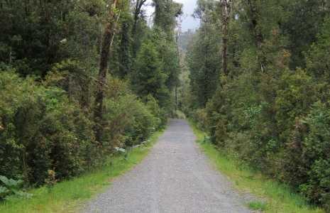 Parco Nazionale Alerce Andino