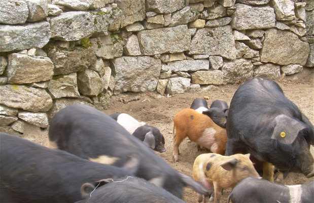animales de Córcega