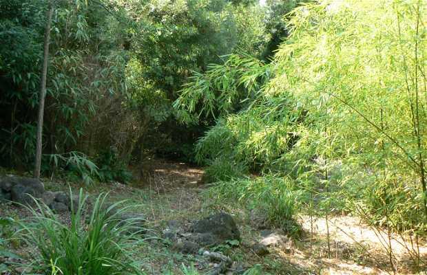 Jardin de piedra y de agua
