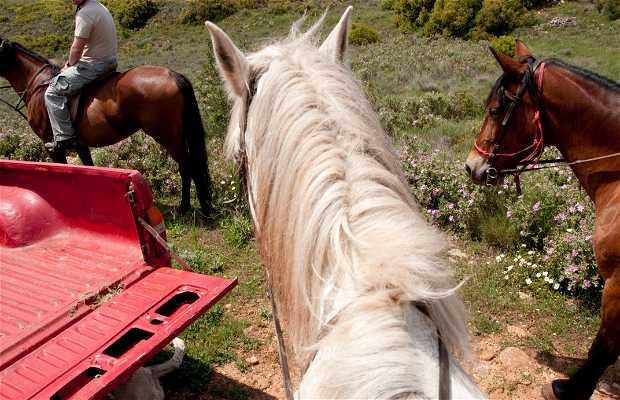 A caballo entre viñedos