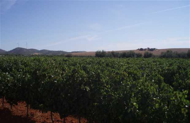Fontalba Capote wineries