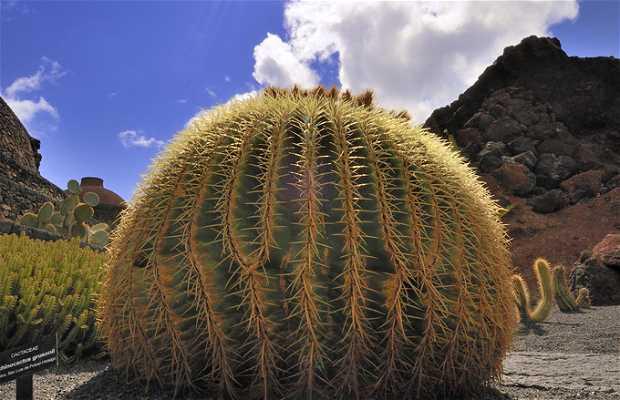 Jard n de cactus en guatiza 14 opiniones y 163 fotos for Fotos de cactus