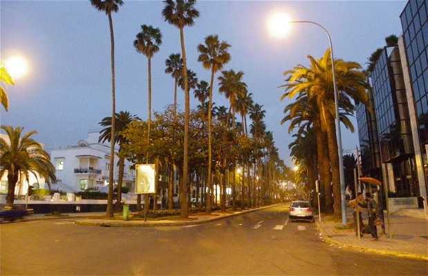 Avenida Moulay Youssef