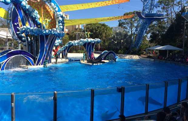 Blue horizons dolphins show (sea world)
