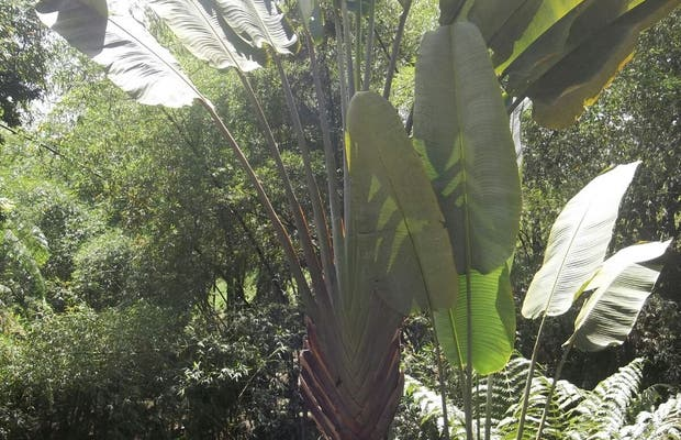 Jardín Botánico Alejandro Humboldt