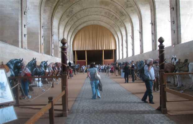 Equestrian Live Museum
