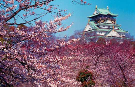 Château de Osaka