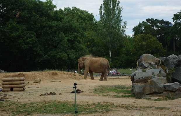 Zoológico de Lyon