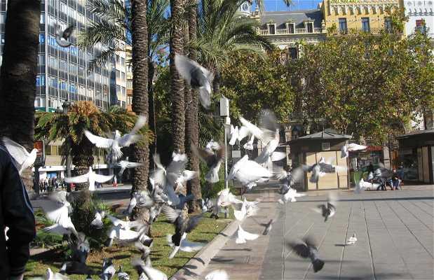 Plaza del Ayuntamiento (Town Hall)