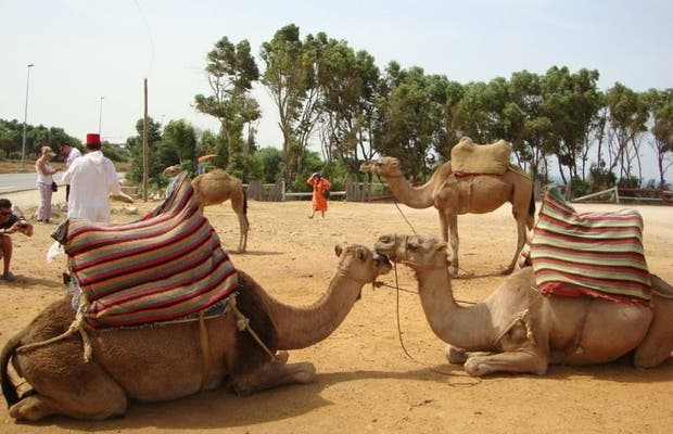 Ride by camel