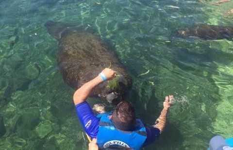 Dolphin Discovery Riviera Maya