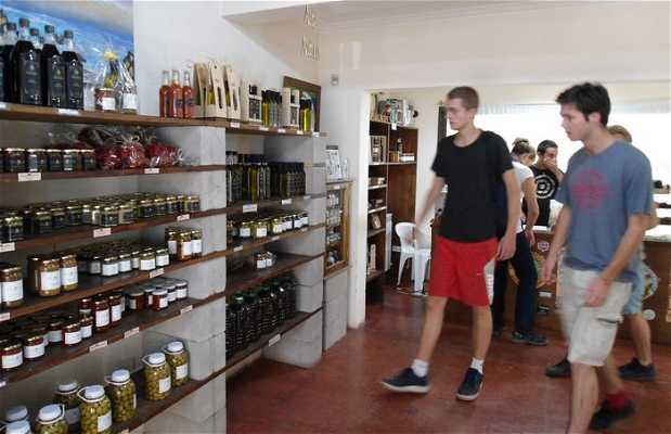 Degustación de aceites de oliva