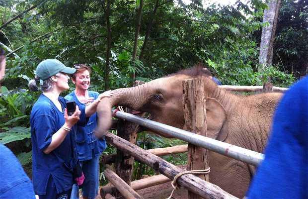 Experiencia con Elefantes
