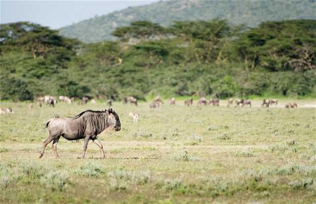 Safari a pie por Ilariak